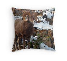 Bighorn Sheep  Throw Pillow