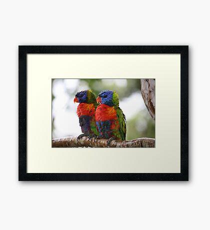 True Mates in the Rainforest Framed Print