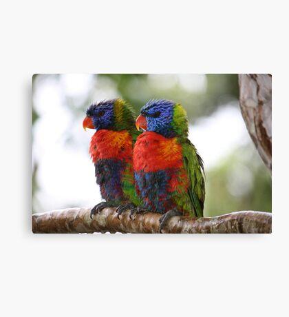 True Mates in the Rainforest Canvas Print