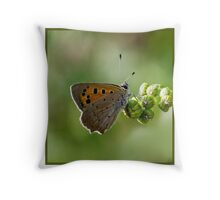 Small Copper Butterfly (Lyceana phlaes) (II) Throw Pillow