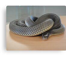 Deadly Snake Canvas Print