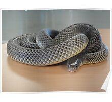 Deadly Snake Poster