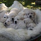 Barrow full of puppy love! by GRCV GRCV