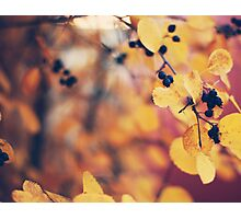 autumn walks Photographic Print