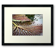 Upside Down Water Lily Framed Print