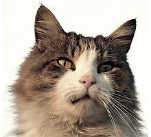 Wanlockhead Cat Photographic Print