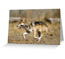 Adorable American Wolf Greeting Card
