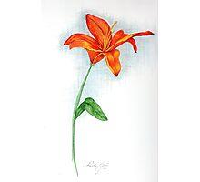 Orange Day Lilly Photographic Print