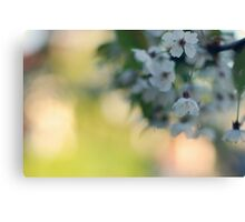 blossoms Canvas Print