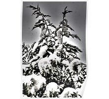 Xmas tree Poster