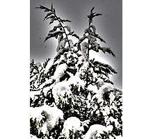 Xmas tree Photographic Print