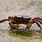 Crab 1 by bapix