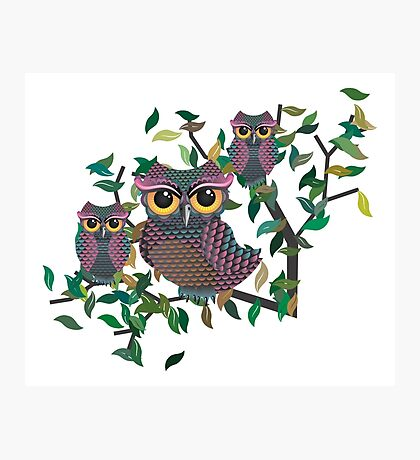 Owls on a Branch Photographic Print