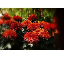 Dreamy Red Photographic Print