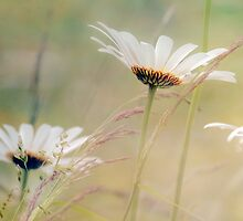 Summer Meadow by alisonstaite