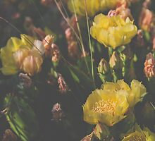Yellow Prickly Pear by Bethany Helzer