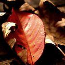 falling leaves(love) by Mustafa UZEL