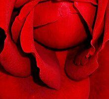 A vision of my heart by DavidROMAN