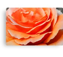 First flowering for the season Canvas Print