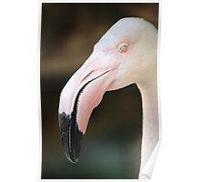 Greater Flamingo Poster