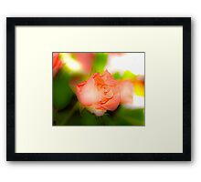 a single rose for you Framed Print
