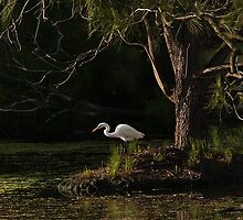 Intermediate Egret by Odille Esmonde-Morgan
