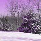 Lavender Snow by Linda Miller Gesualdo
