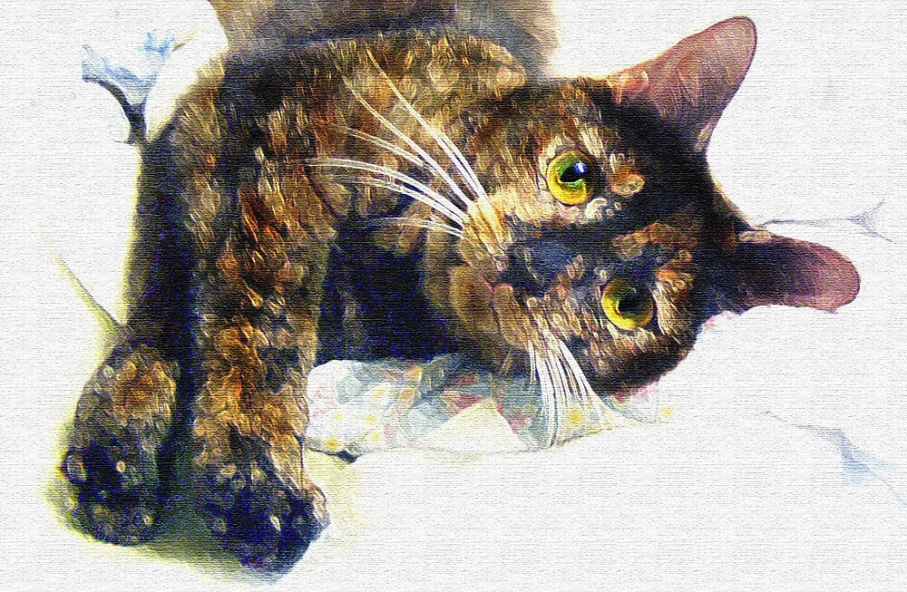 contented cat by jashumbert