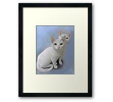 white kittens Framed Print