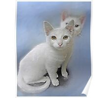 white kittens Poster