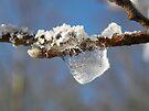 Frozen Water Droplet  by rhian mountjoy