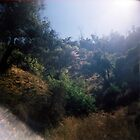 Light in the Valley, Griffith Park, August 14 2010 by joshsteich