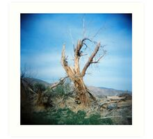 Forked Tree, Anza Borego, CA February 2010 Art Print