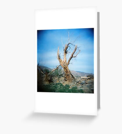 Forked Tree, Anza Borego, CA February 2010 Greeting Card