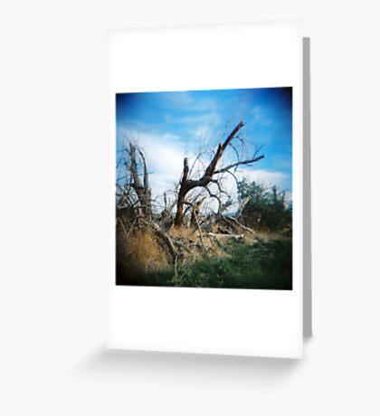 Listing Tree, Anza Borego, CA February 2010 Greeting Card