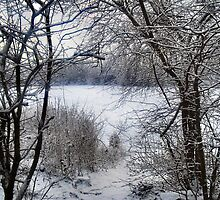 FRAMING THE SNOW. by ronsaunders47