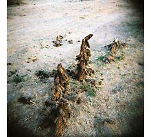 Cactus Men, Anza Borego, CA February 2010 Photographic Print