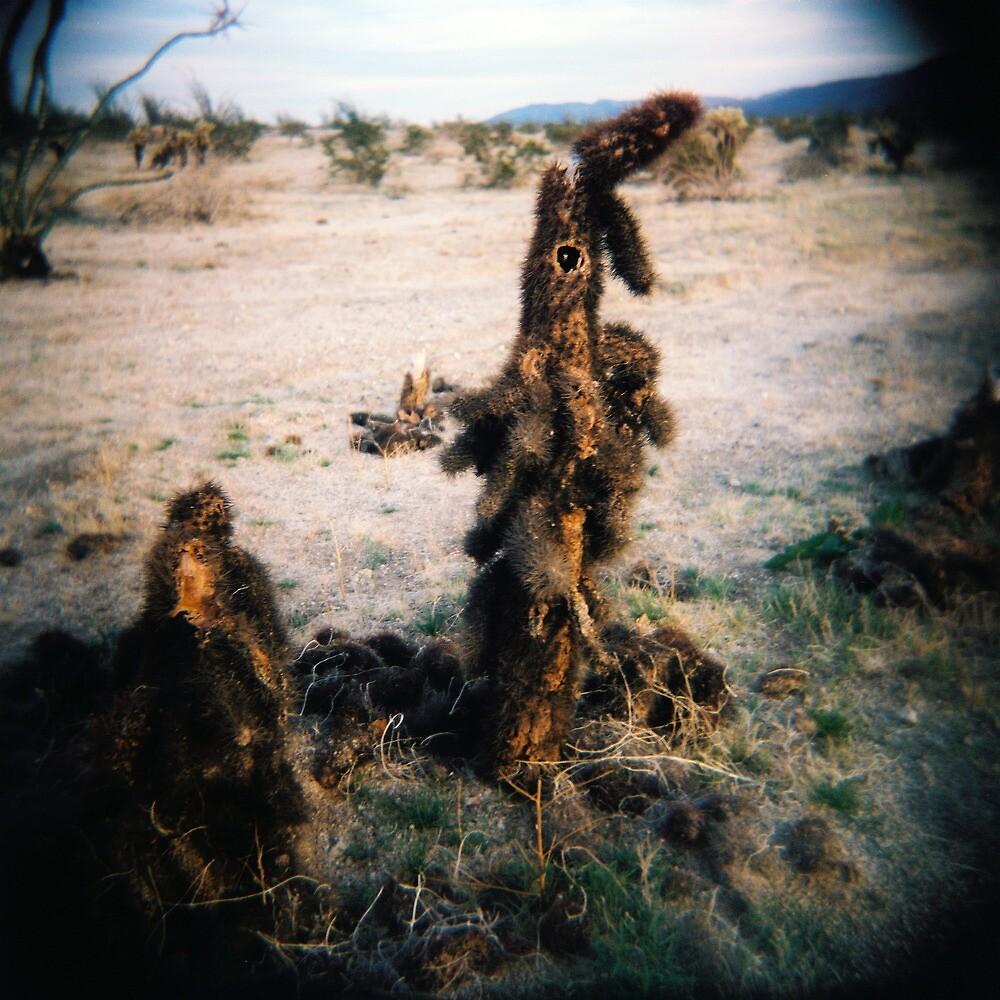 Cactus Men II, Anza Borego, CA February 2010 by joshsteich