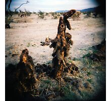 Cactus Men II, Anza Borego, CA February 2010 Photographic Print
