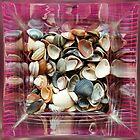 Shell from Sheveningen... by zdepe
