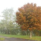 Young chestnut in misty park by steppeland