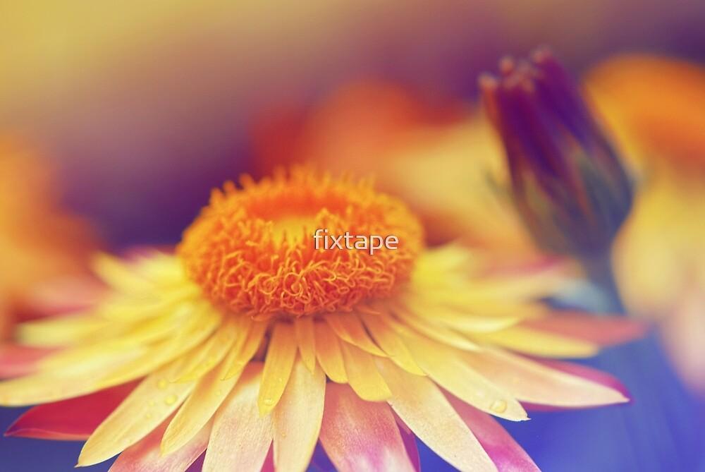 Softest Orange Petals by fixtape