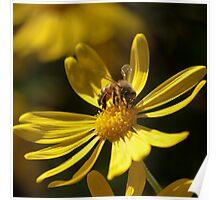 """""""Buzzed Daisy"""" Poster"""