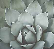 Agave 2 by Bethany Helzer