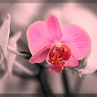 Reminder of beauty by imagic