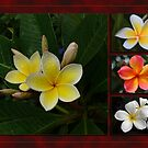Frangipani Gold by Keith G. Hawley