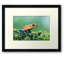 Strawberry Poison Dart Frog Framed Print