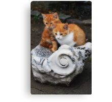 Kittens in Troy Canvas Print