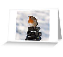 Modelling Robin 2 Greeting Card