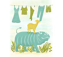 Humphrey the Hippo and the Cameroon Mountain Goat Photographic Print
